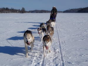 Bearskin Mushing 2011